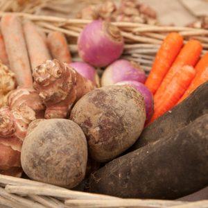 Légumes à racine