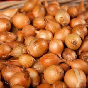 oignon-sauce-grelot