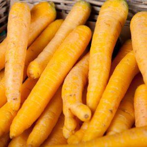 carotte-jaune