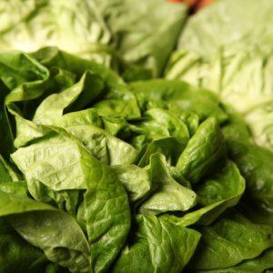salade-laitue-pommée-cabus